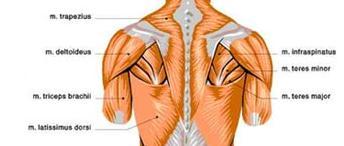 grandes-musculos-del-golf1
