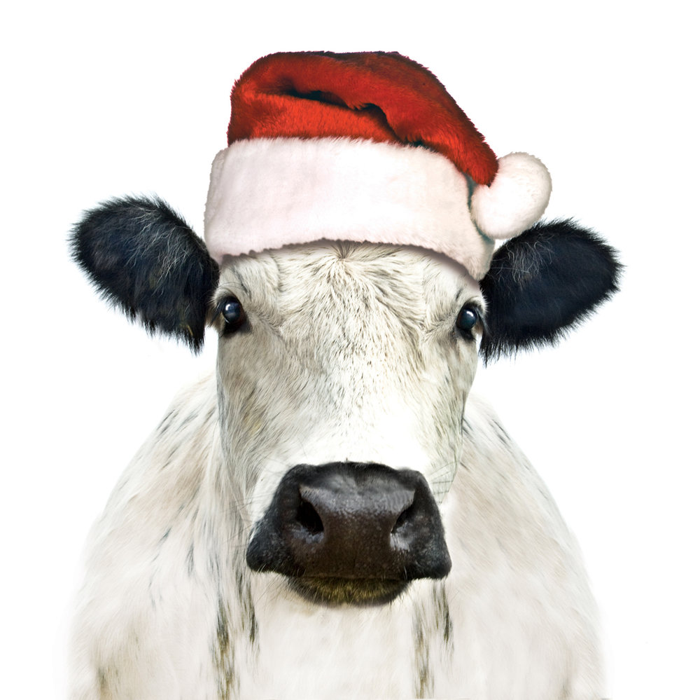Christmas Cow - Newsletter.jpg