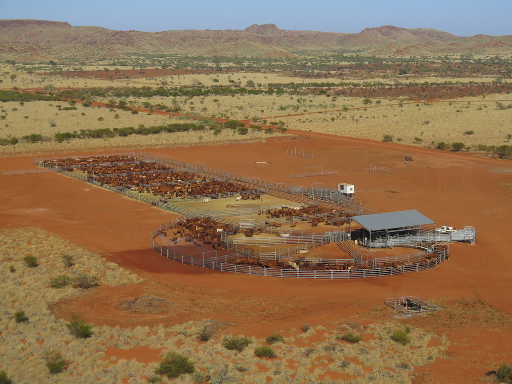 Cattle Yards and COC Drone image.jpg