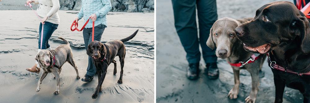 family-pups-pets.jpg