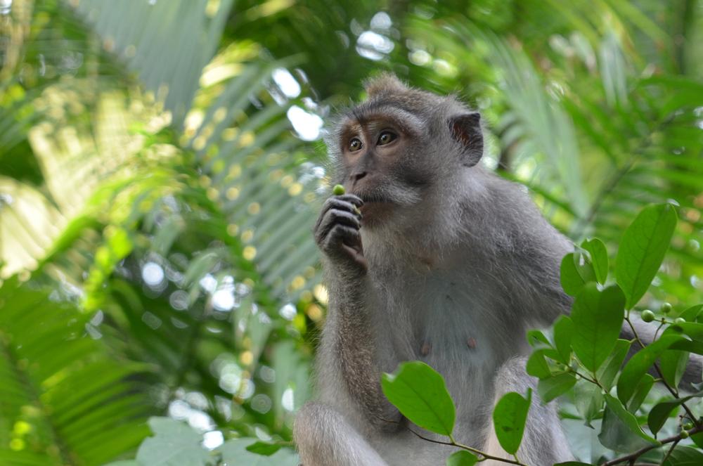 monkey-small.jpg