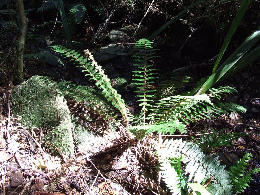 Pine Valley flora