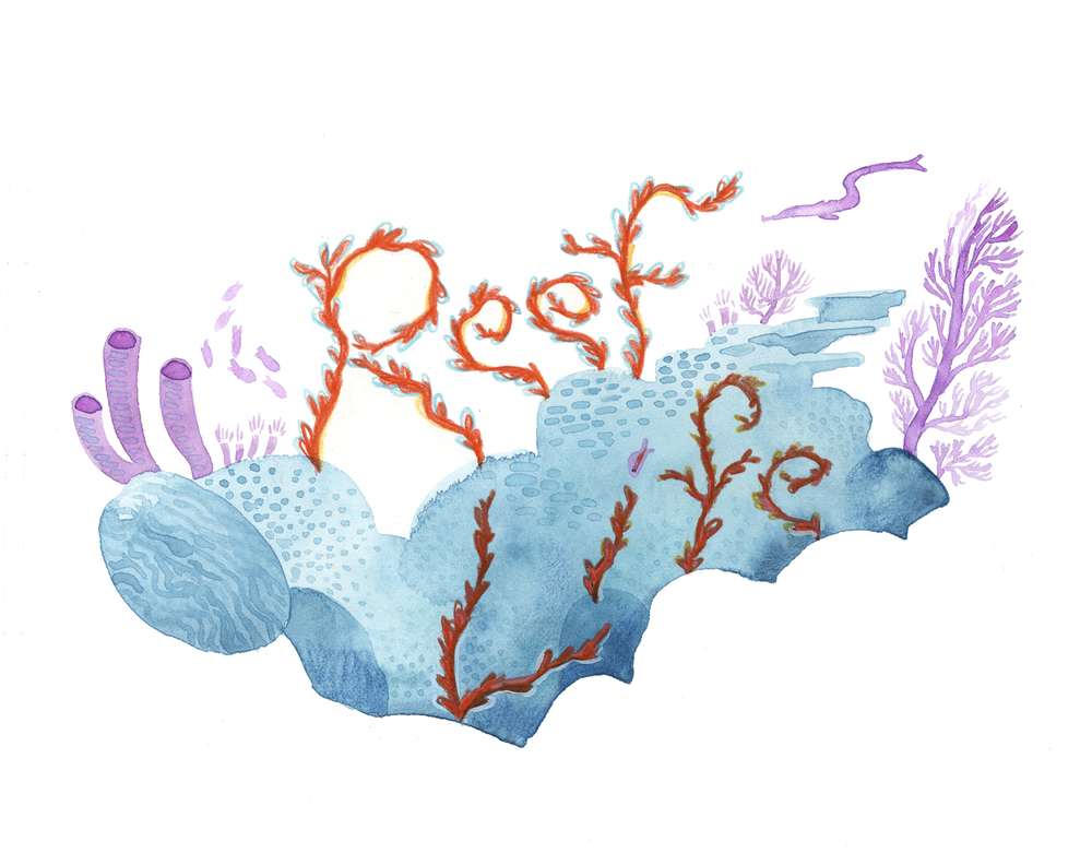 Reef Life