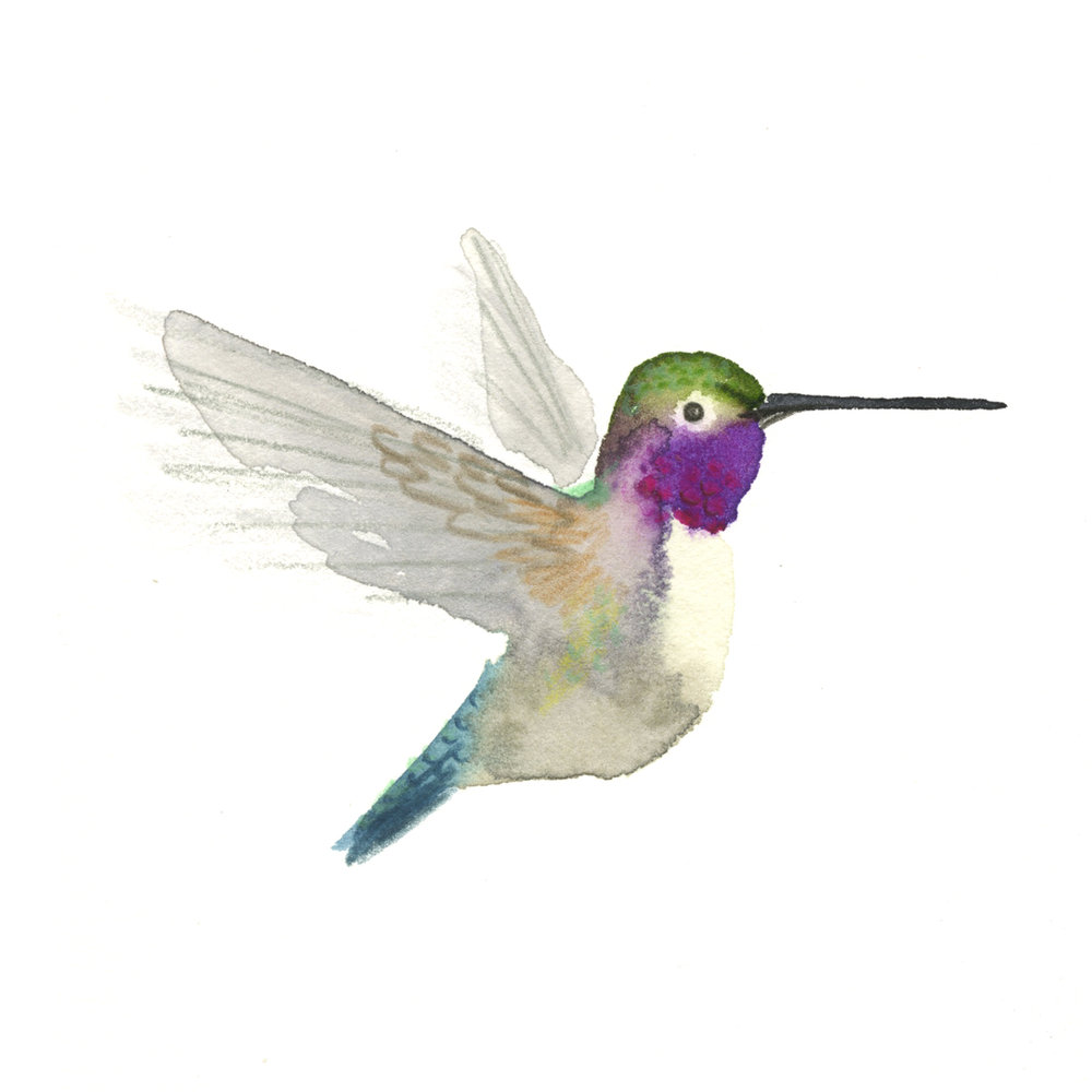hummingbird_web.jpg