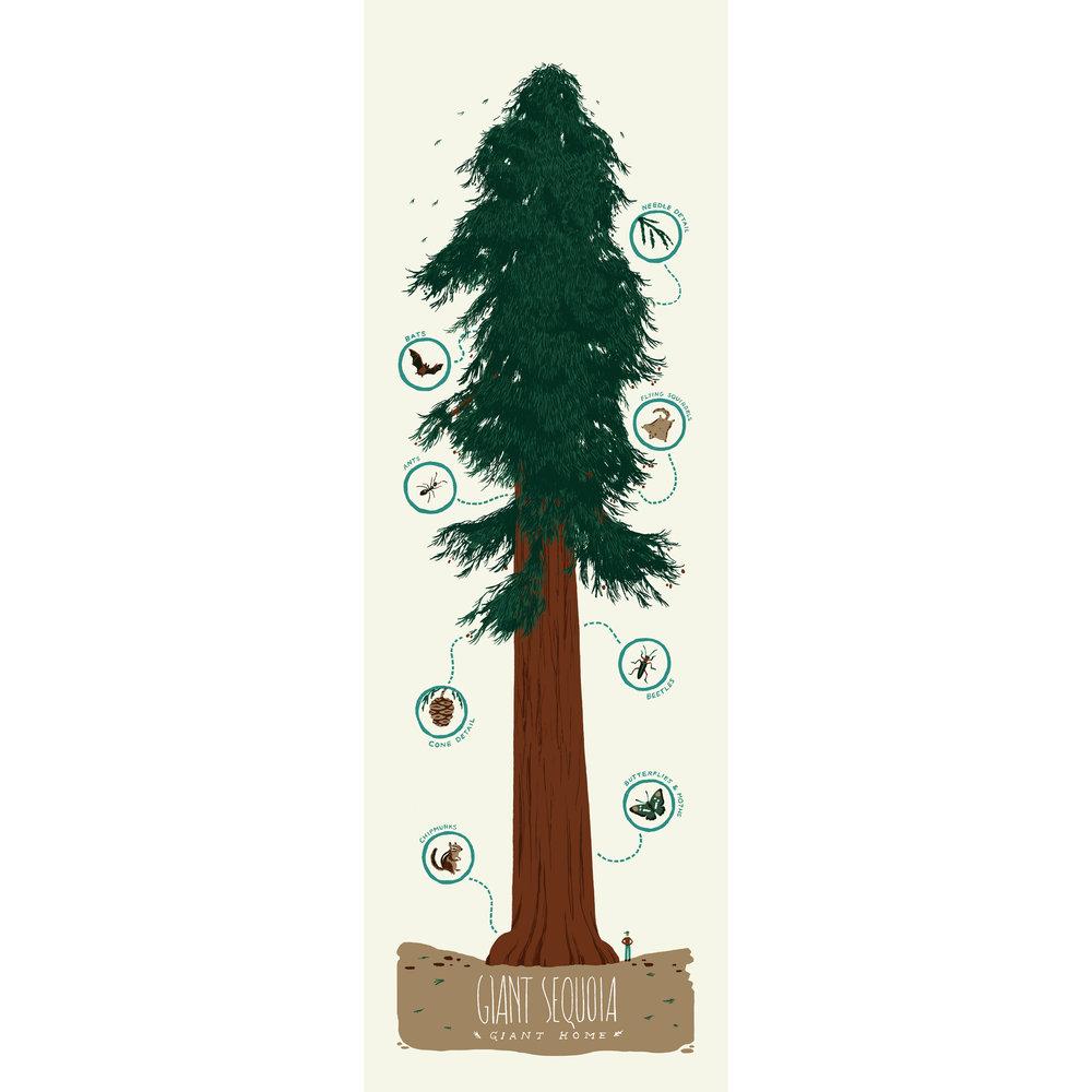 Sequoia_forshop copy 4.jpg