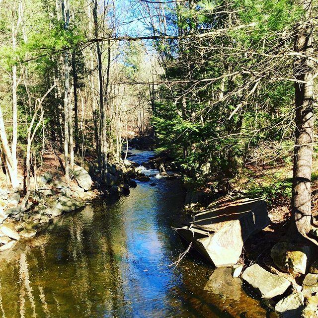 Gorgeous Thanksgiving Day trail run 🏃 🍁🍗🍷❤️ #happythanksgiving #grateful