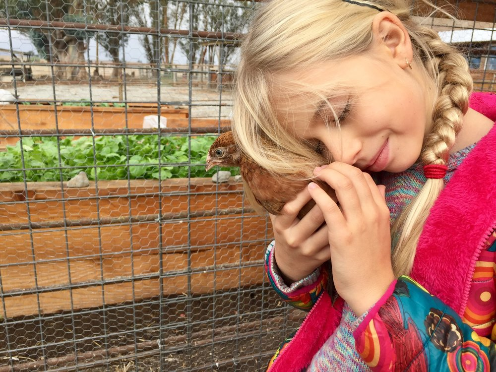 To support the 3rd grade farming curriculum, students spend every Monday working in the garden and visiting their chickens.