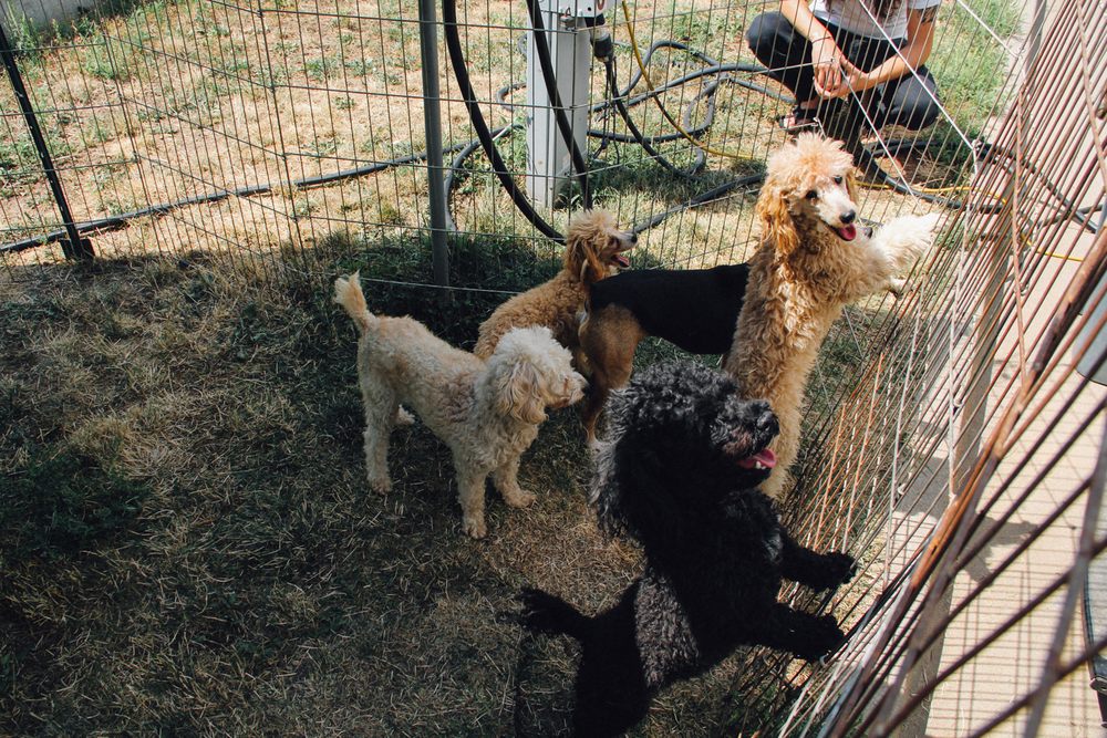 dog_circus