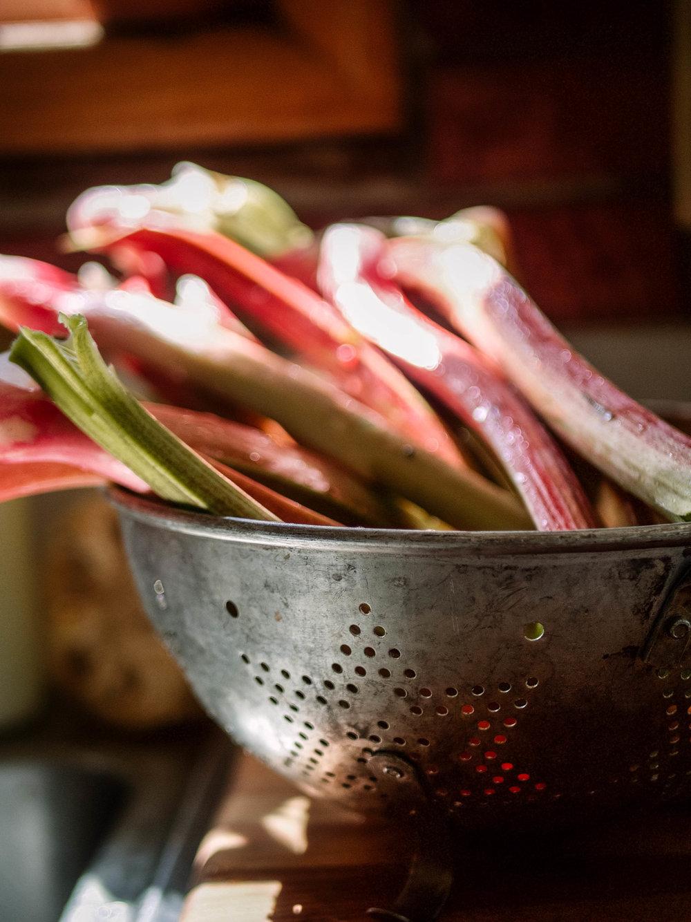 Spring Rhubarb Harvest