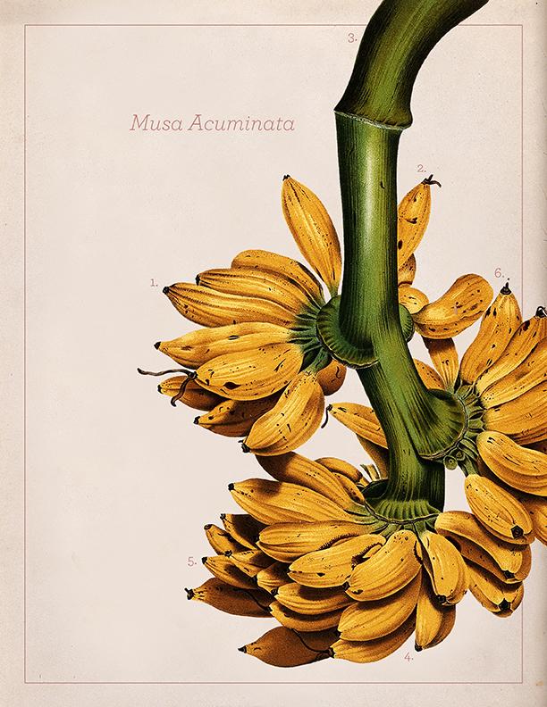 banana4.jpeg