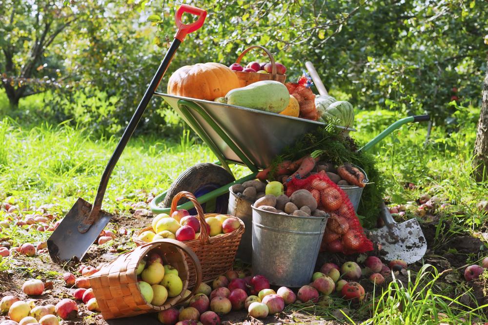 autumn-garden-fruits