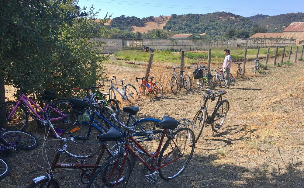 Bikes upon Bikes!