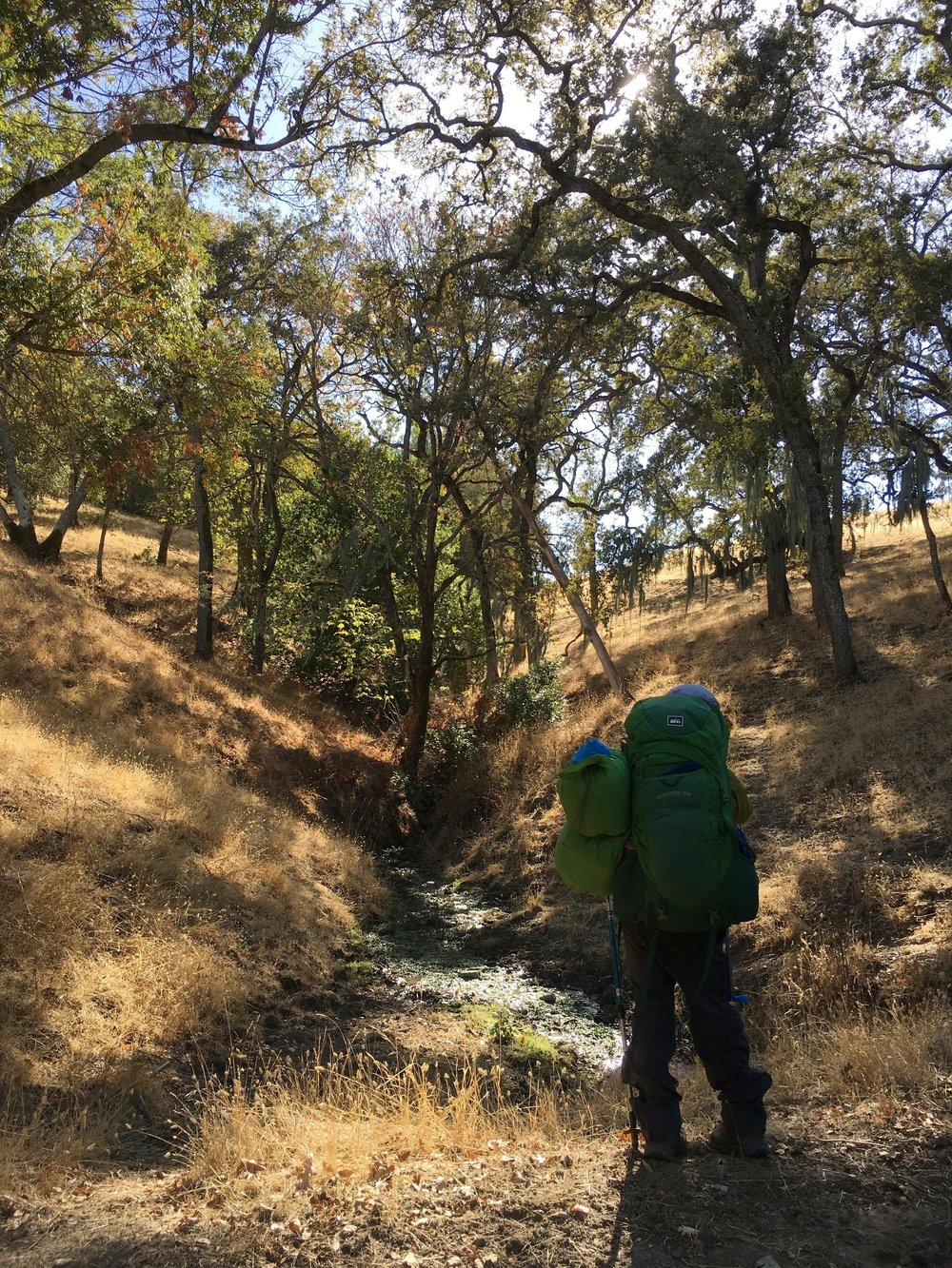 A stream along the Ohlone Wilderness.