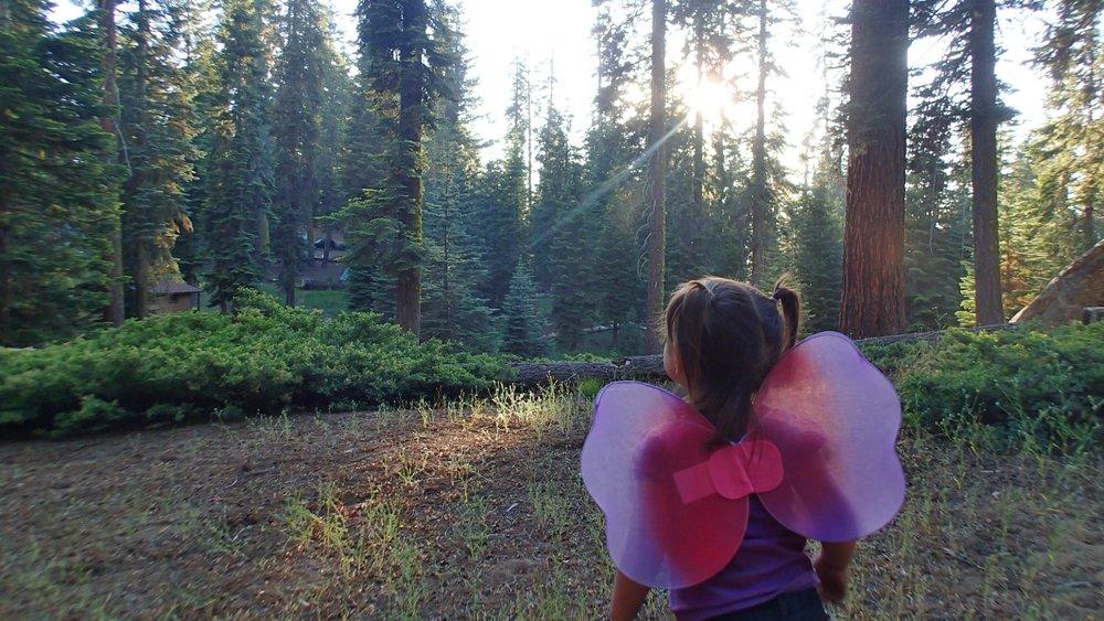 Imaginando las hadas del bosque.