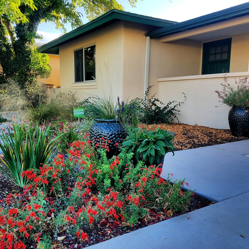 #fallflowers at the house of one of our favorite clients. Every design is focused on bringing color year round instead of just a spring bonanza followed by a plot of green the rest of the year (a common oversight in #landscapedesign.) We are lucky to work with such nice people, both our teachers and clients. #southwesthorticulture #landscape #xeriscape #Albuquerque #newmexico #landscaping