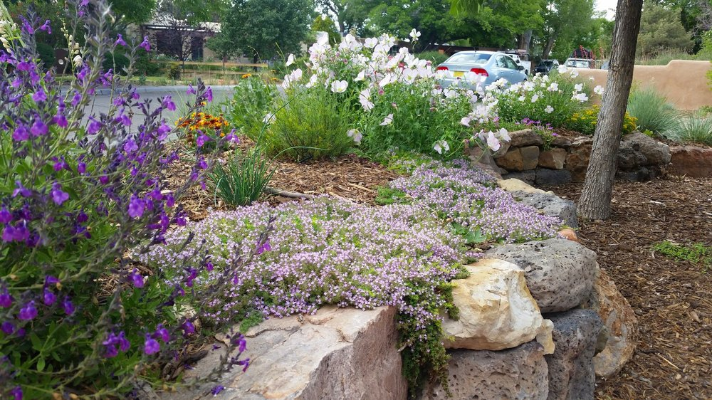 Small additions over time have created a lovely garden for one of our clients in downtown abq.  #southwesthorticulture