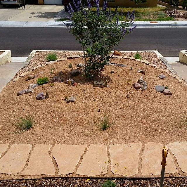 This is a  #rock  #garden that we installed earlier this year. The  #plants below the magnificent  #chaste  #tree are predominantly  #cacti and other low growing  #succulents Though slow to mature, these plants will soon provide outrageous color in the  #spring and early  #summer using only  #natural precipitation to  #survive .  #southwesthorticulture  #landscaping  #landscape  #desert  #highdesert  #conservation  #design  #flora  #botany