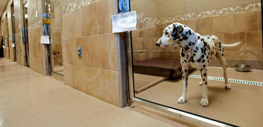 West Rome Animal Clinic.jpg
