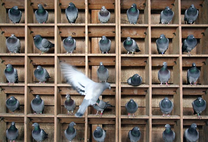 Pigeon-holes