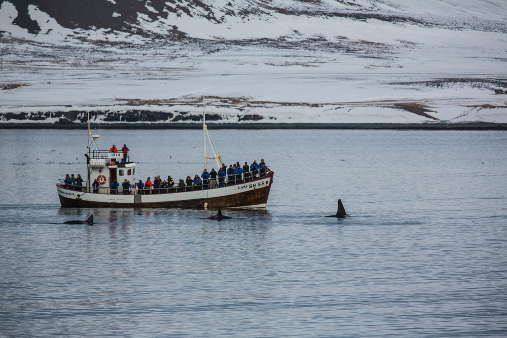 Whale watching in Grundarfjörður