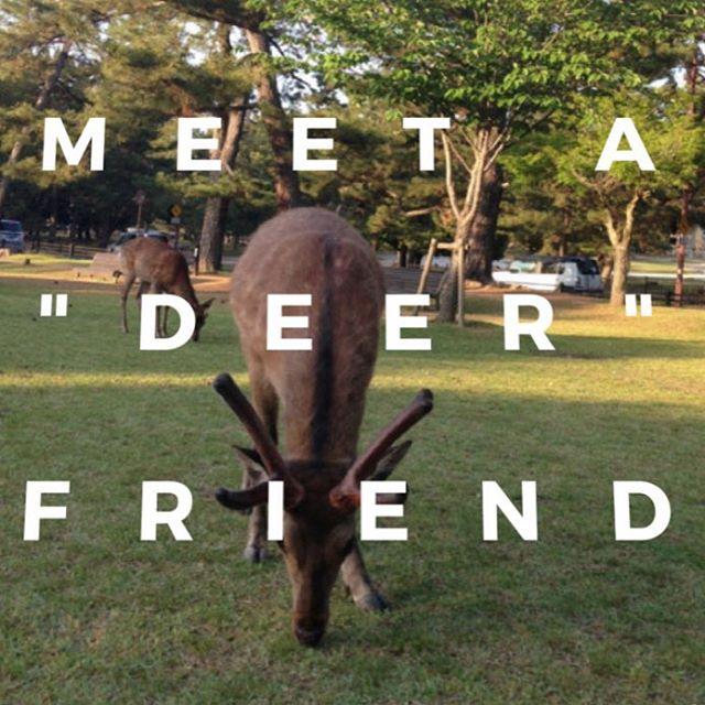 Meet a dear (or deer) friend #travel, #nara, #japan #startup, #app #deer #wildlife http://www.anchorup.jp