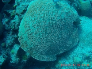 Figure 2. Tropical Coral from Bermuda