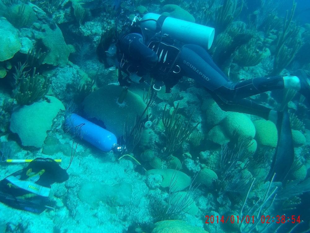 Figure 5. BIOS dive team member coring coral adjacent to Hog Reef CO2 buoy, Bermuda