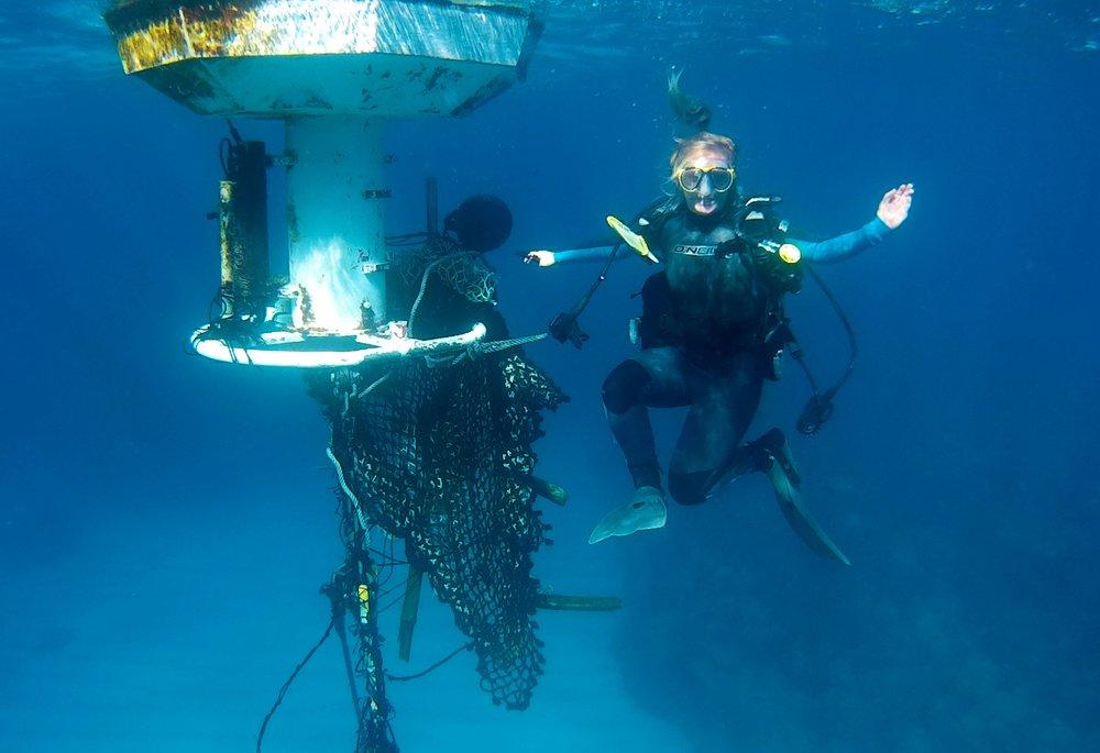 Figure 6. B-team Phd student sara Fowell cleaning off the Hog reef CO2 buoy, Bermuda