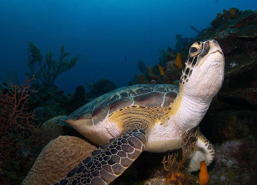 turtle final (1 of 1).jpg