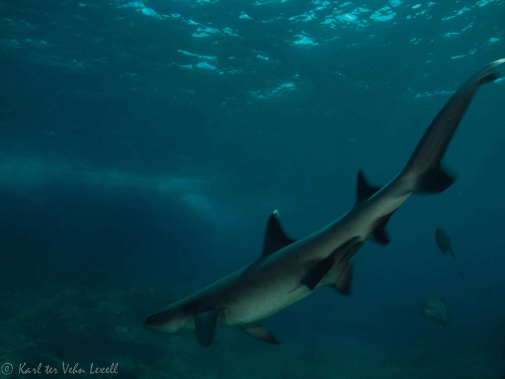 5 Really Good Reasons to Protect Sharks