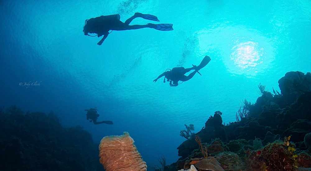 Dive With Us