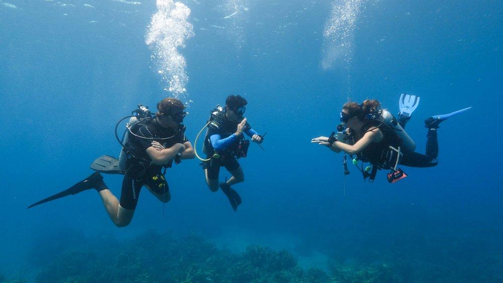 roatan divers underwater