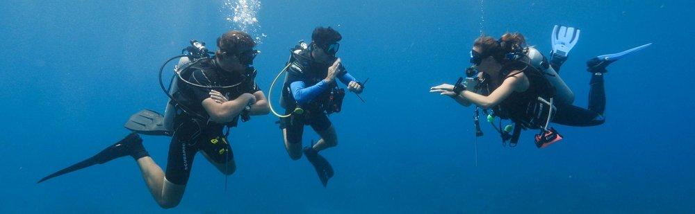 Season specials Roatan Divers