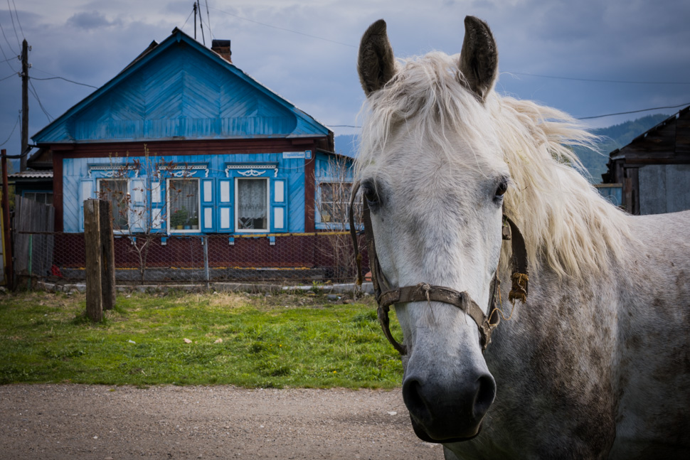 Siberia white horse photo workshops Harald Claessen