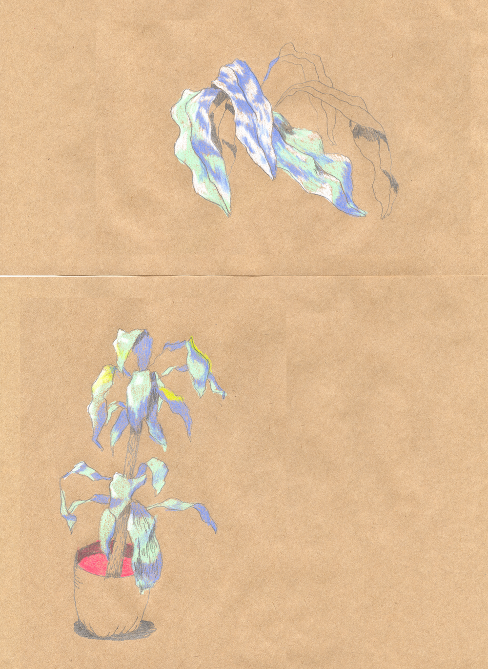 brown_paper_plants.png