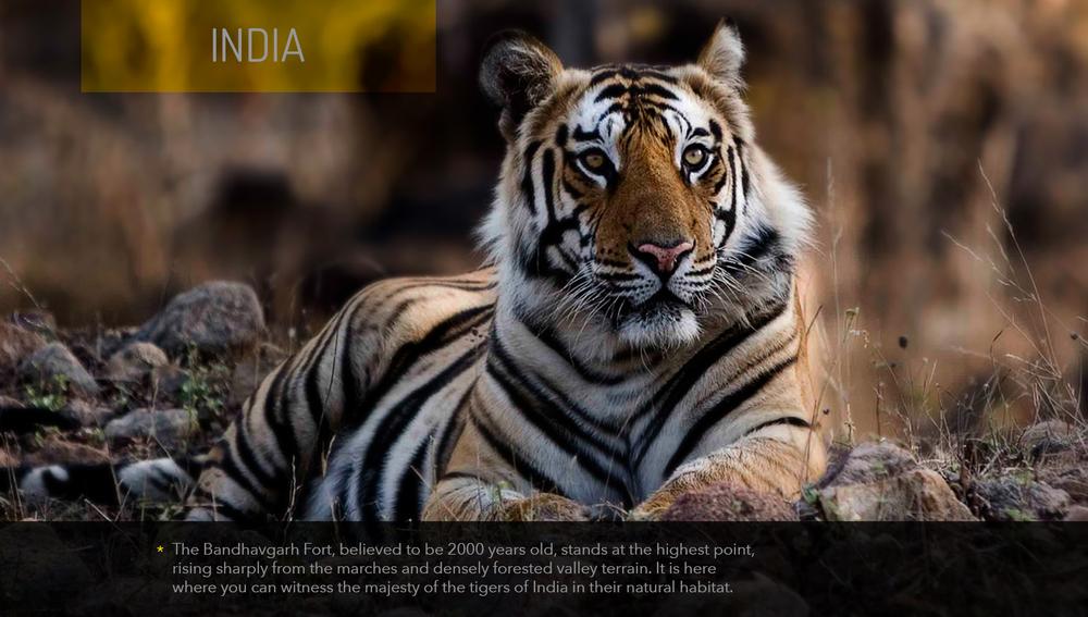 Tiger_India.jpg