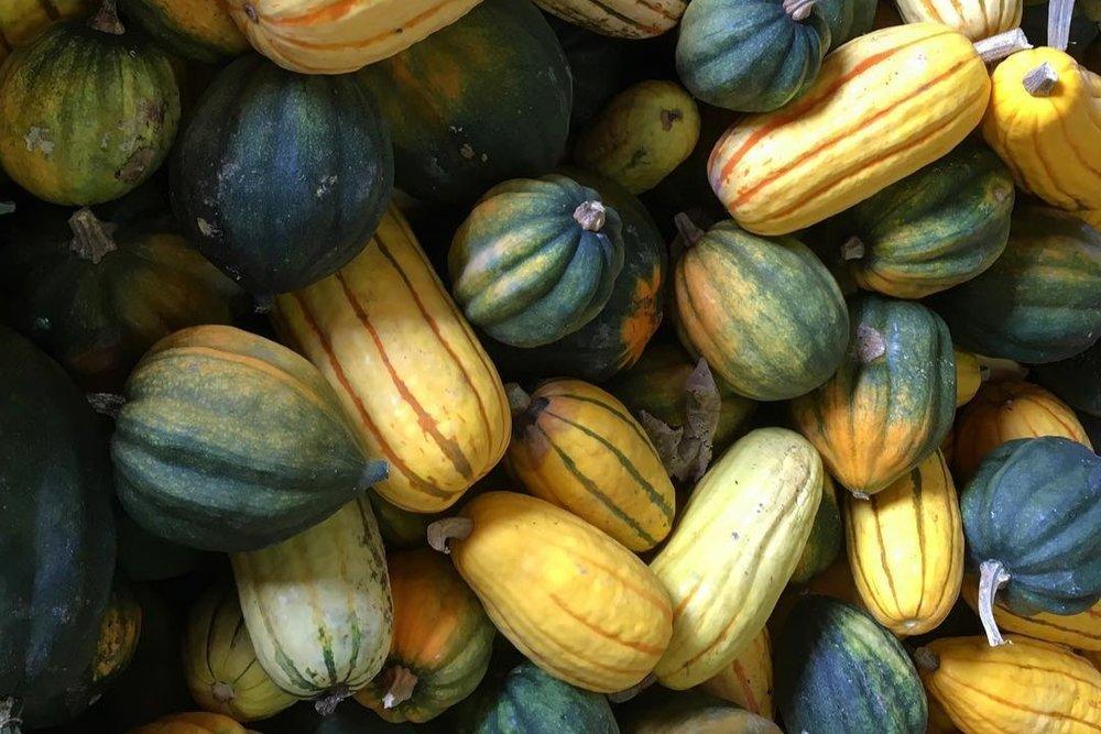 GJC+Squash+Harvest+Oct+2017.jpg