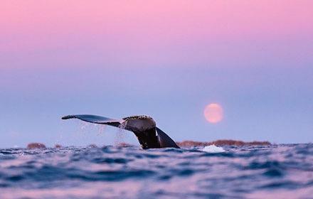 whales-000.jpg