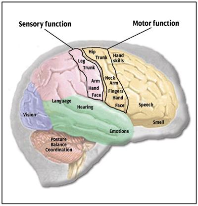 brain-side