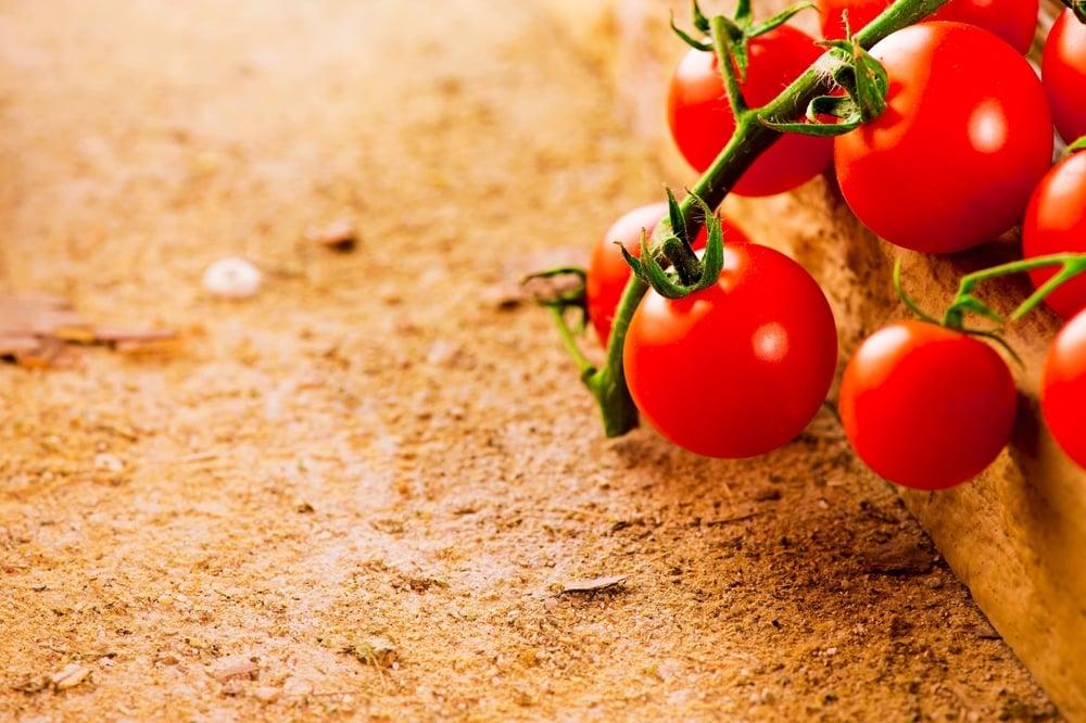 cherry,-tomatoes,-summer,-Justyna-Pankowska,-green,-vegetable,-vege,-gluten-free,-raw,-food,-studio-meksyk.jp3.jpg