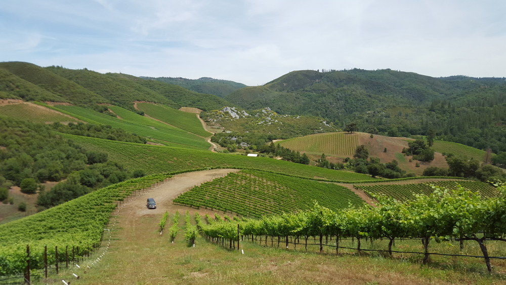 Rorick Vineyard, Calaveras County