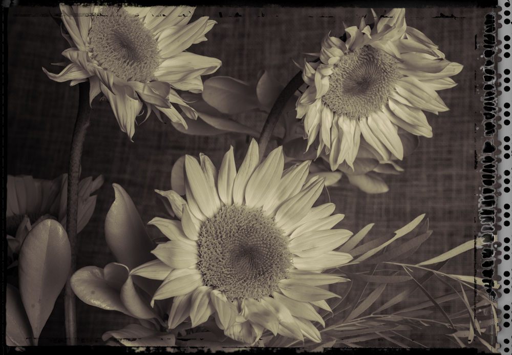 Flowers in the Studio