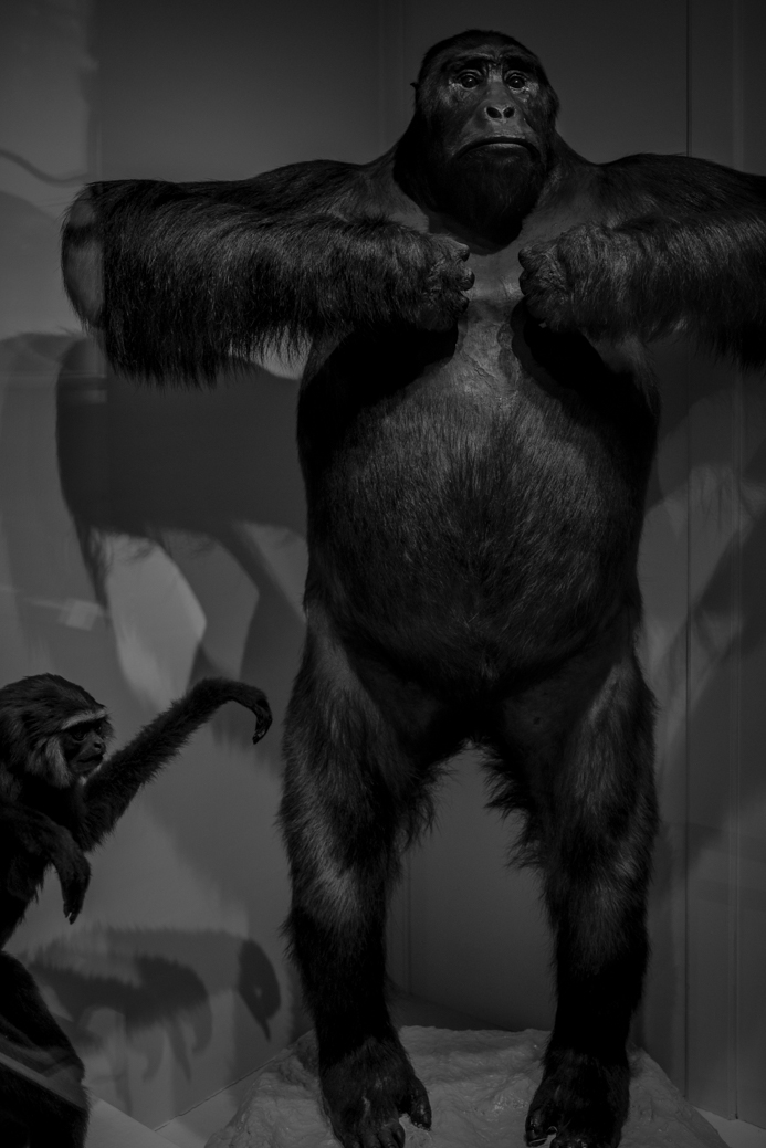Gibbon and Gorilla