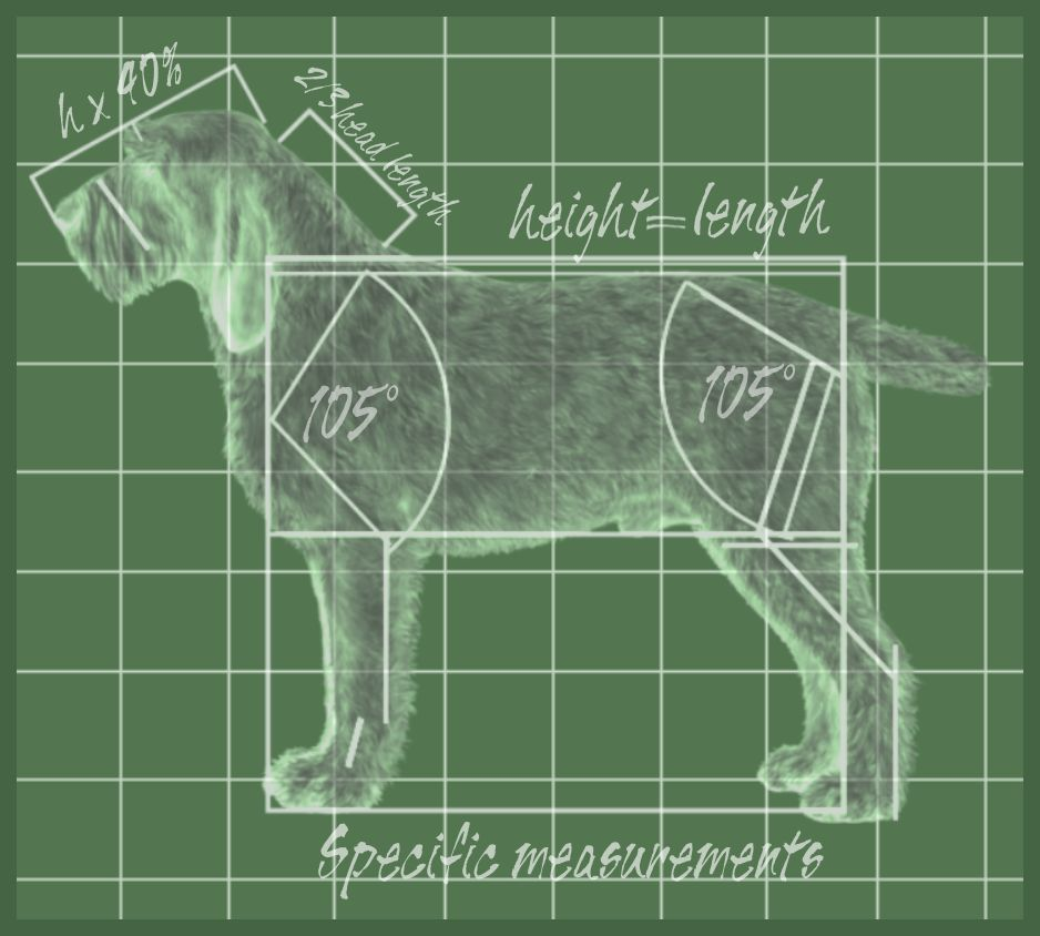 illustrated-breed-standard-diagram