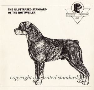 Illustrated Breed Standards Technical Dog Art For Judges