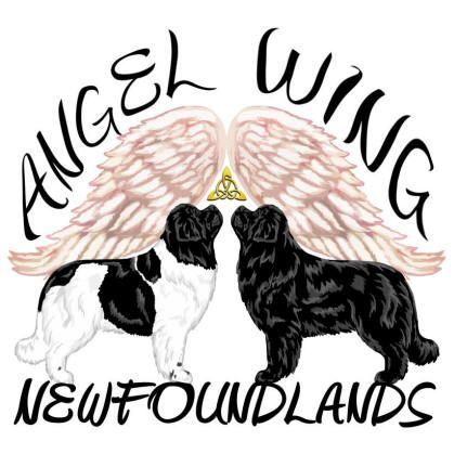 Angel Wing Newfoundlands logo - Style: colored pencil + graphic color