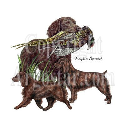 Boykin Spaniel logo - Style: colored pencil