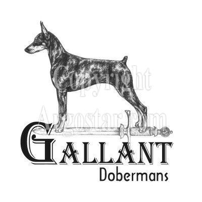 Gallant Dobermans Logo
