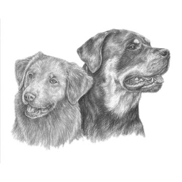 Rose & Ella Portrait - Nova Scotia Duck Tolling Retriever and Rottweiler