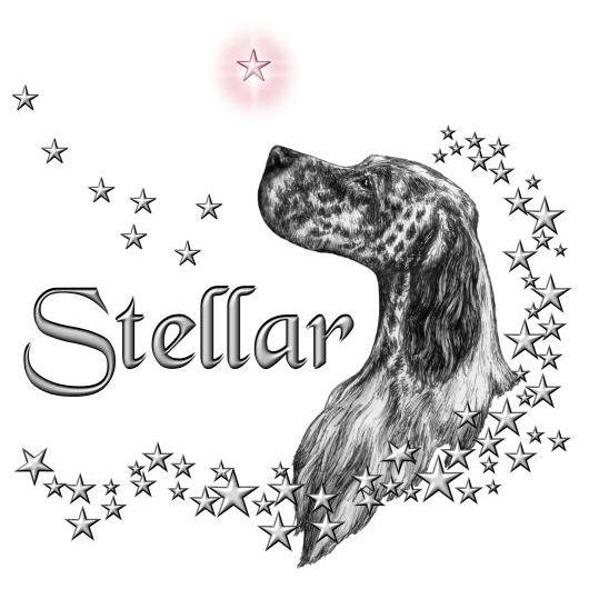Stellar Setters Logo